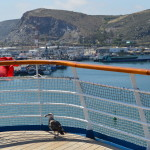 seagull ensenada mexico from carnival inspiration